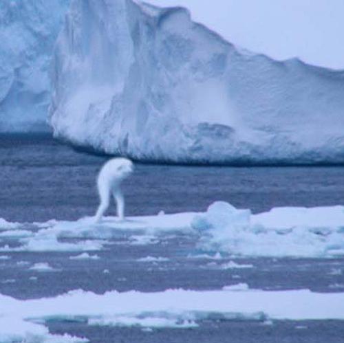 O fiinţă necunoscută în apele Antarcticii