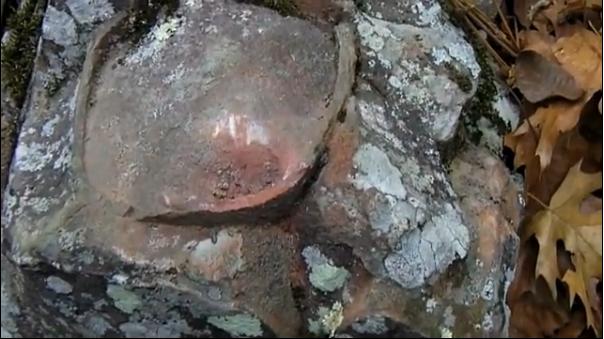 Ţevi fosilizate din negura timpului