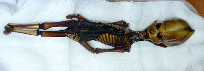 O mumie stranie şi cranii misterioase