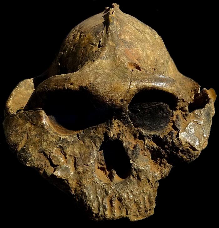 Abel, vechi de peste 500.000 de ani