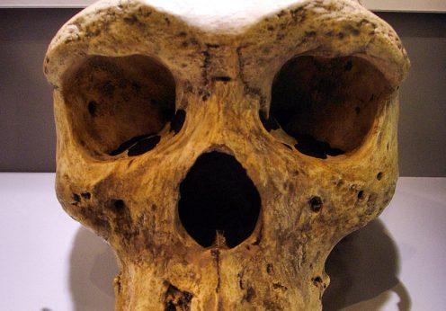 Homo rhodesiensis