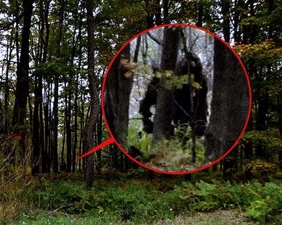 O colonie de Bigfoot profilează în junglă